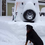 The Rottweiler wants to play. The Wrangler does too.